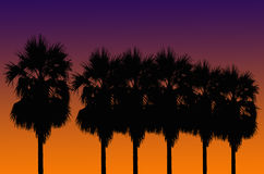 Silhouetted of coconut tree. During sunrise Royalty Free Stock Photo