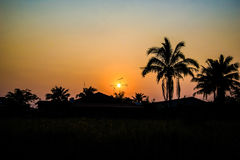 Silhouetted of coconut tree at sunset Royalty Free Stock Images
