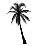 Silhouetted coconut tree. On the white background Stock Photos