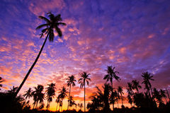 Silhouetted of coconut trees Royalty Free Stock Image