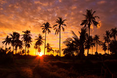 Silhouetted of coconut trees Stock Images