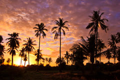 Silhouetted of coconut trees Royalty Free Stock Images