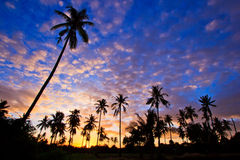 Silhouetted of coconut trees Royalty Free Stock Photography