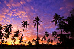 Silhouetted of coconut trees Stock Photos