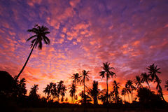 Silhouetted of coconut trees Stock Photography