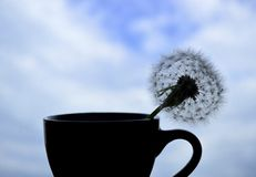 Silhouetted dandelion in a cup against the blue sky stock photo