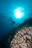 Silhouetted divers above a coral reef Royalty Free Stock Image