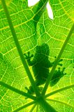Silhouetted of frog Royalty Free Stock Image