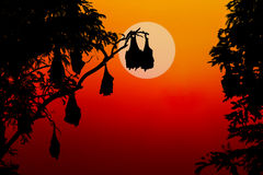 Silhouetted fruit bat on tree at sunset Royalty Free Stock Photos
