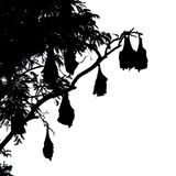 Silhouetted fruit bat on tree Royalty Free Stock Image
