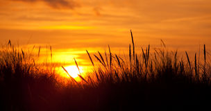 Silhouetted grasses  at sunset Stock Photography