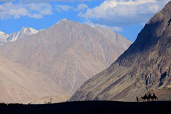 Silhouetted kamel Arkivfoto