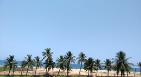 Silhouetted kokosnötpalmträd med fantastiska bakgrunder Arkivfoto