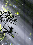 Silhouetted leaves Stock Photography