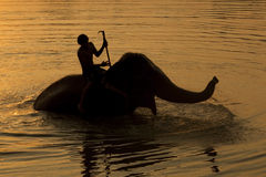 Silhouetted mahouts bathing the elephants during sunset. Royalty Free Stock Image