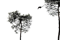 A silhouetted monkey jumping Royalty Free Stock Image