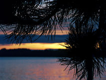 Silhouetted Needles. A through the needles view of Lake Washington stock images