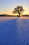 Silhouetted Oak in Snowy sunset 018 Stock Image