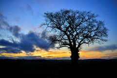 Silhouetted Oak Tree against Dramatic Sky Stock Images