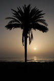 Silhouetted Palm Stock Photo