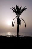 Silhouetted Palm Stock Image