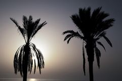 Silhouetted Palm Royalty Free Stock Images