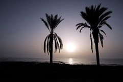 Silhouetted Palm Royalty Free Stock Photography