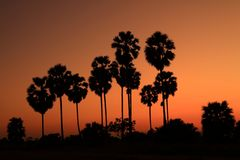 Silhouetted palm tree Stock Image