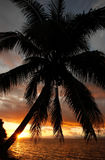 Silhouetted palm tree on a beach, Vanua Levu island, Fiji Stock Photography