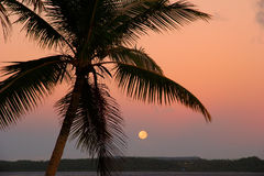 Silhouetted palm tree with the moon, Ofu island, Tonga stock images