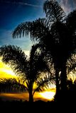 Silhouetted Palm Tree During Sunset royalty free stock photography