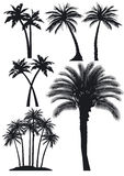 Silhouetted palm trees Stock Photo