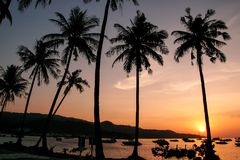 Silhouetted palm trees and boats at sunrise on Ao Ton Sai, Phi P. Hi Don Island, Thailand. Koh Phi Phi Don is part of a marine national park Stock Photography