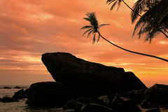 Silhouetted palm trees and rocks at sunset, Unawatuna, Sri Lanka Royalty Free Stock Photo