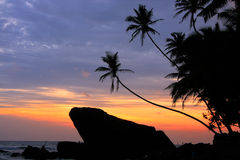 Silhouetted palm trees and rocks at sunset, Unawatuna, Sri Lanka Royalty Free Stock Photos