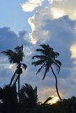 Silhouetted Palms in San Pedro, Belize Royalty Free Stock Images