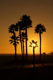 Silhouetted palms at Sunset. Palm trees silhouetted against an orange sky on Santa Monica Beach, California USA stock photo
