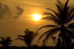 Silhouetted palmträd mot en härlig solnedgång på stranden Arkivbilder