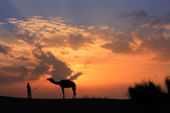 Silhouetted person with a camel at sunset, Thar desert near Jais Stock Photos