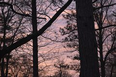 Pine tree at sunset stock photography