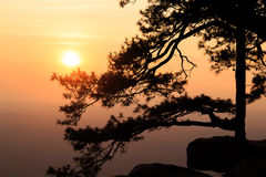 Silhouetted pine tree with sunset Royalty Free Stock Images