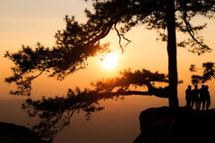 Silhouetted pine tree with sunset Stock Photo
