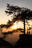 Silhouetted pine tree with sunset Stock Images