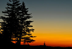 Silhouetted pines in sunrise. Royalty Free Stock Photography