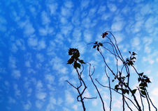 Silhouetted Plant Royalty Free Stock Image