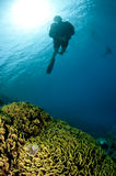 Silhouetted scuba diver and coral Royalty Free Stock Photo
