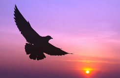 Silhouetted seagull flying Stock Photography