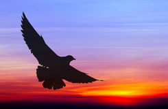 Silhouetted seagull flying Stock Photos