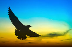 Silhouetted seagull flying Stock Images