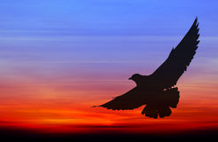 Silhouetted seagull flying Royalty Free Stock Photo